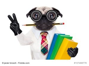 Foto lustiger Hund mit Bleistift im Mund