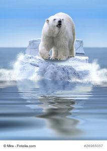 Foto Eisbaer auf Eisscholle