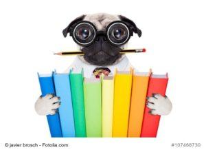 Lustiger Hund mit Büchern und Brille